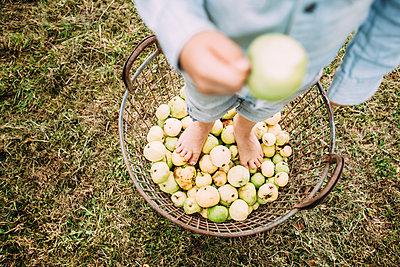 Little boy stands in apple basket - p586m1068297 by Kniel Synnatzschke
