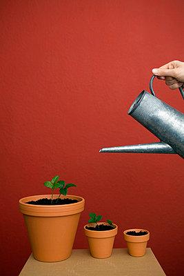 Pflanzen gießen - p4540381 von Lubitz + Dorner