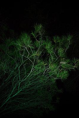 Dunkel grün - p454m2158731 von Lubitz + Dorner