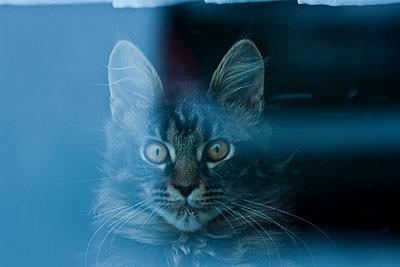 wilde Katze - p9791658 von Orlowski