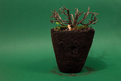 Potted plant - p252m2043737 by Jens Dommermuth