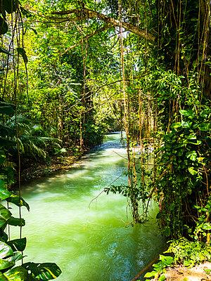 """Jamaika, Region Montego Bay; Martha Brae river"" - p300m2143425 by Martin Moxter"
