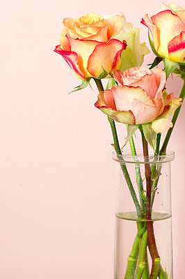 Roses in a vase - p4730170f by Stock4B