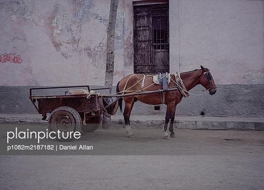 Cuba, Havana, Horse an Cart - p1082m2187182 by Daniel Allan