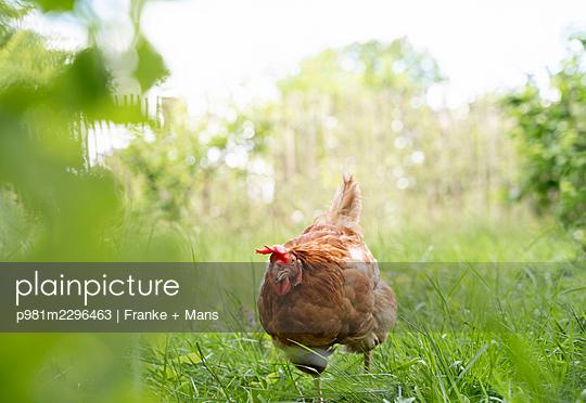 p981m2296463 by Franke + Mans
