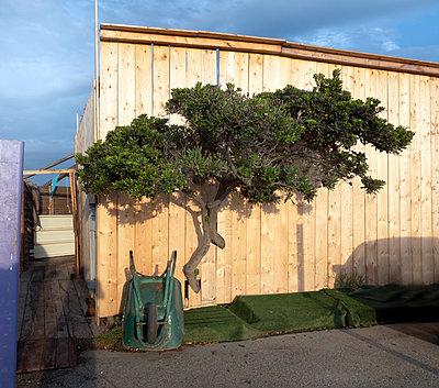 Raum für Baum - p1494m2086905 von Inkje Drescher