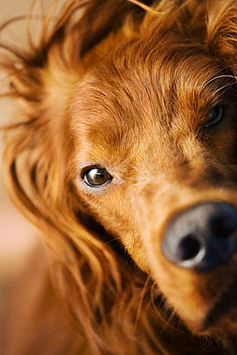 Close-up of a dog - p3741516 by Lauri Rotko