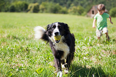 Dog and boy running in field - p9243128f by Image Source