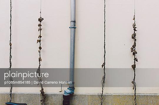 Kletterpflanzen - p1085m854185 von David Carreno Hansen