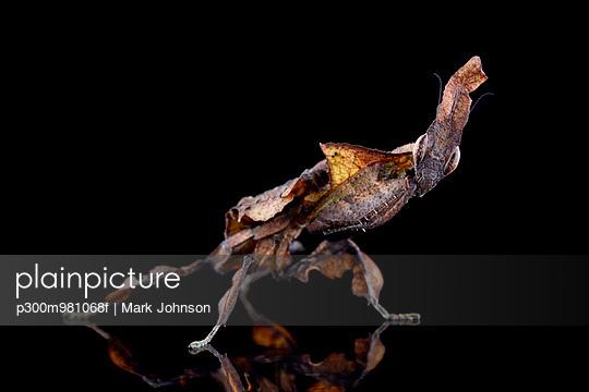 p300m981068f von Mark Johnson