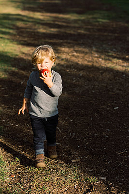 Little boy eating an apple in the middle of an apple orchard. - p1166m2151896 by Cavan Images