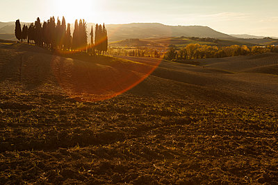 Italy, Tuscany, Val d'Orcia, rolling landscape with group of trees - p300m1206327 by Christina Falkenberg