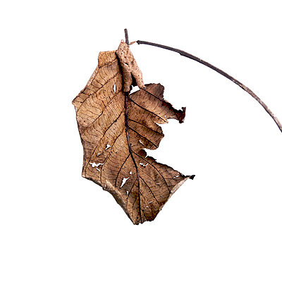 Autumn leaf - p8130251 by B.Jaubert