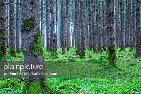 Mossy forest ground - p1466m2289423 by Stefanie Giesder
