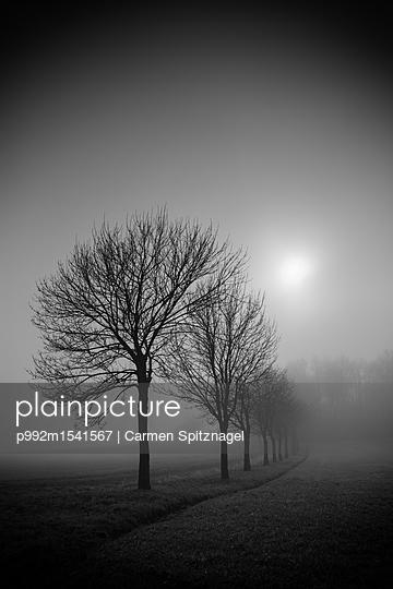Bäume im Nebel - p992m1541567 von Carmen Spitznagel