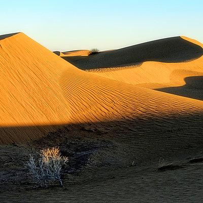 Sand dunes - p636m2021658 by François-Xavier Prévot