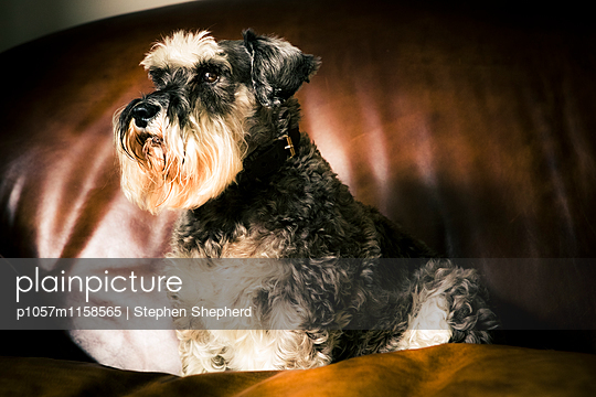 Freundlicher Hund - p1057m1158565 von Stephen Shepherd