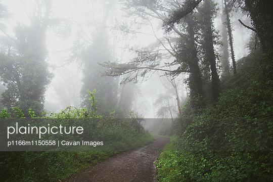 p1166m1150558 von Cavan Images