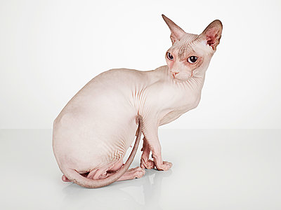 Nude Cat - p1318m1154949 von Tom Seelbach