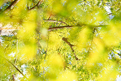 Treetop - p763m971678 by co-o-peration