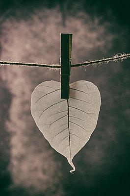 Hanging skeleton leaf  - p794m902110 by Mohamad Itani