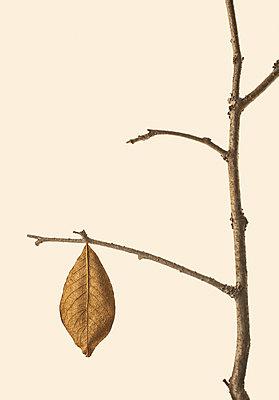 Golden leaf on branch - p971m1332850 by Reilika Landen
