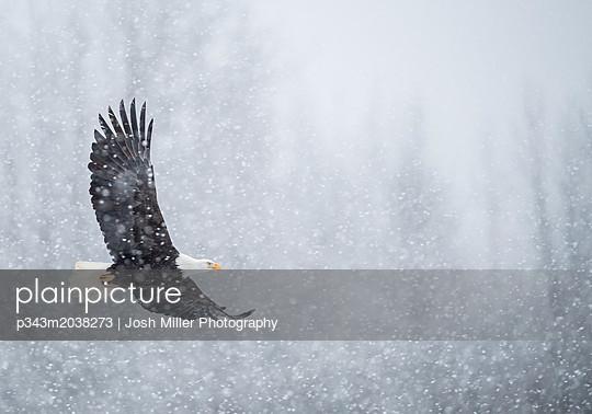 p343m2038273 von Josh Miller Photography