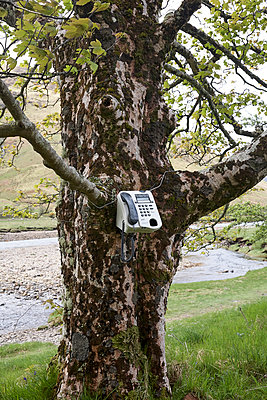 Vintage telephone attached to tree - p1612m2223540 by Heidi Coppock-Beard
