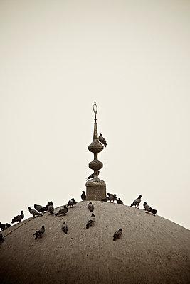 Tauben sitzen auf dem Kuppeldach einer Moschee in Sanliurfa, Türkei - p586m971429 von Kniel Synnatzschke