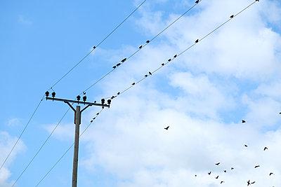 Birds on power line - p1229m2108575 by noa-mar