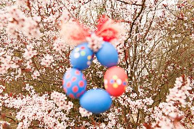 Eierkranz im Frühlingsbaum - p533m901805 von Böhm Monika