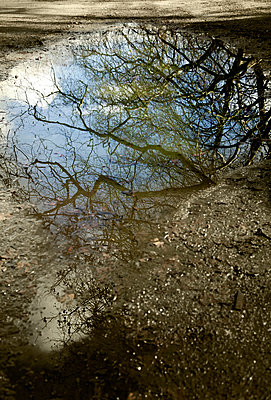 Zweige spiegeln sich in einer Pfütze - p1248m1538613 von miguel sobreira