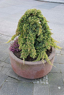 Plant container - p260m1072994 by Frank Dan Hofacker