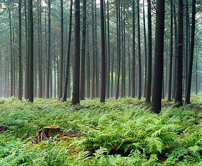 Wald in Niedersachsen - p324m815436 von Alexander Sommer