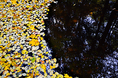 water leafs - p876m1207396 by ganguin