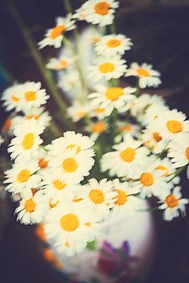 Daisies in vase - p970m2073350 by KATYA EVDOKIMOVA