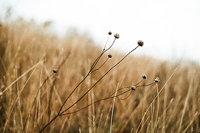 Macro shoot of dry plants inside the forest. - p1166m2094867 by Cavan Images