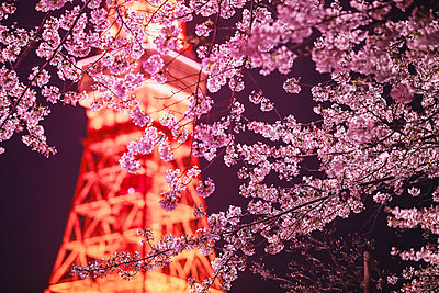 Cherry blossoms and Tokyo tower - p307m1174658 by Score. by Aflo