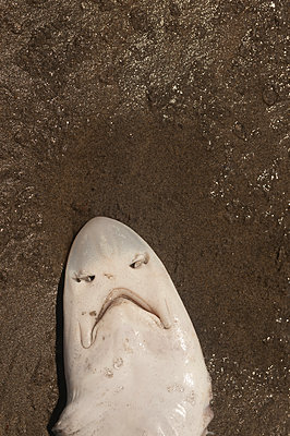 Kleiner Hai - p470m1556417 von Ingrid Michel