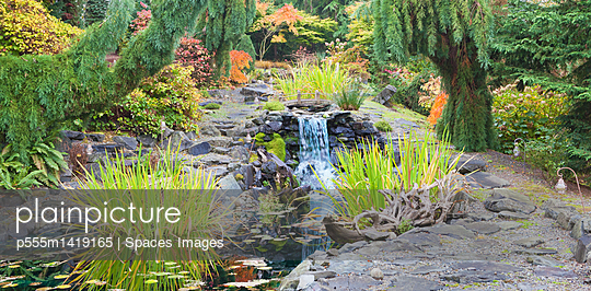 Autumn leaves on bushes around waterfall feature in landscaped garden - p555m1419165 by Spaces Images