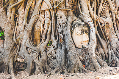 Thailand, Ayutthaya, Buddha head in between tree roots at Wat Mahathat - p300m2005273 by William Perugini