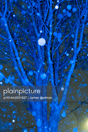 Tree during snowstorm at night - p1614m2231627 by James Godman