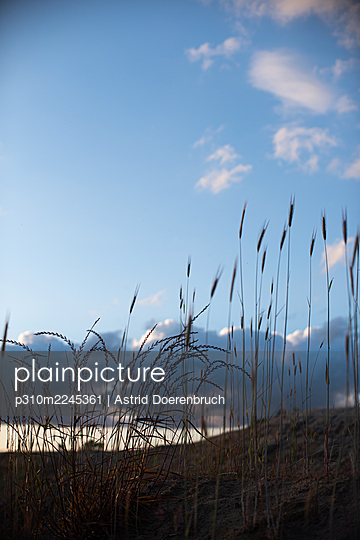Sky and grass - p310m2245361 by Astrid Doerenbruch