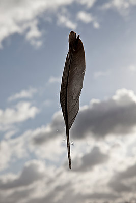 feather - p1670m2247582 by HANNAH
