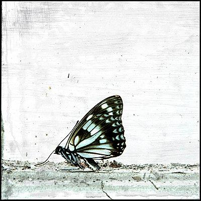 Schmetterling - p451m1128956 von Anja Weber-Decker