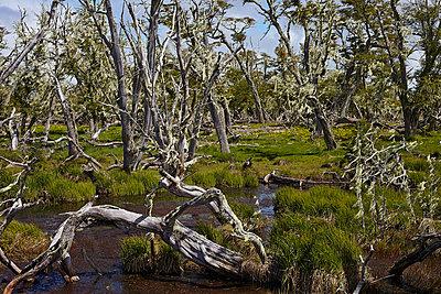 Patagonischer Wald - p719m883190 von Rudi Sebastian