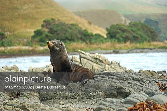 Robbe am Ufer  - p162m1573902 von Beate Bussenius