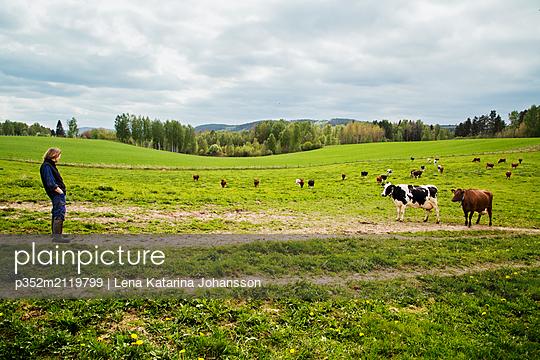 Farmer with cows in field - p352m2119799 by Lena Katarina Johansson