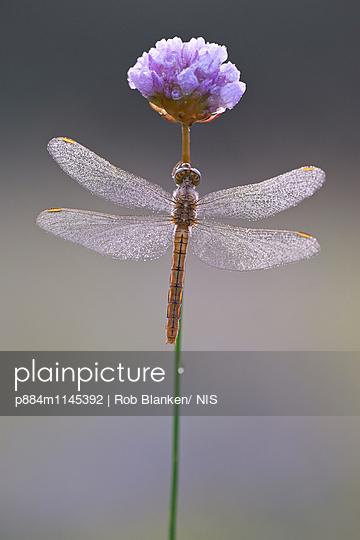 p884m1145392 von Rob Blanken/ NIS