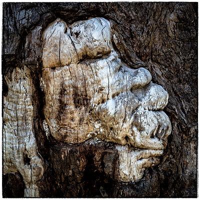 Baumrinde formt ein Gesicht - p1154m1425703 von Tom Hogan